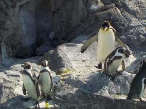 ペンギン①1